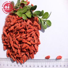 Wolfberry / Lycium Barbarum / Baies de goji naturelles