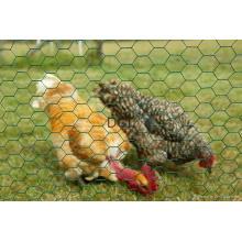 Malha de arame hexagonal para galinha