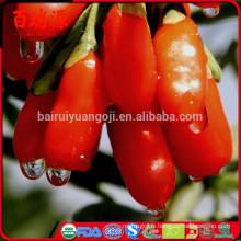 Ningxia original séché baies de goji baies de goji barbary goji fruits loisirs collations