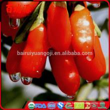 Оригинальные Нинся сушеные ягоды годжи ягоды годжи барбари годжи фрукты досуг закуски