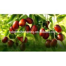 Jujube chinesische rote Datteln billig getrocknete Früchte