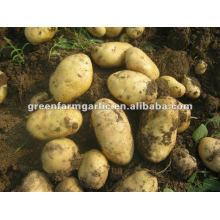 fresh potato in 10/20kg mesh bag in competition price