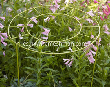 ring-grow-through-supports- delphinium