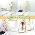 Lehrmodelle Plastic Human Skeleton Anatomie mit Nerven Modell