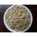 Chinese Buckwheat Kernels Yulin Origin
