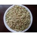 Origem de Yukim de grãos de trigo mourisco chinês