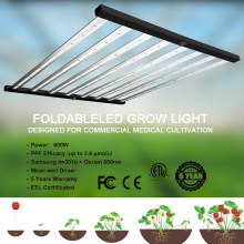 Best Grow Light for Indoor Greenhouses
