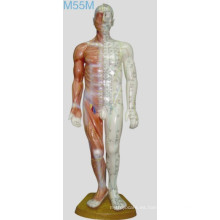 Modelo humano de la acupuntura los 60cm