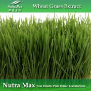 Wheat Grass Extract/Wheat Grass Powder