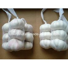 Hot Sales Chinese Garlic in Best Price