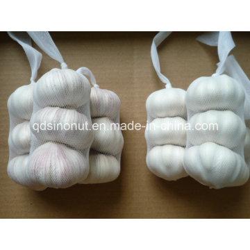 Hot Sales Ajo chino en el mejor precio