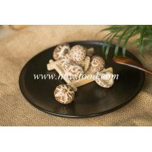 Comida saudável 3-4 cm Thin Tea Flower Mushroom