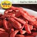 Níspero chino Wolfberry orgánico Goji Berry