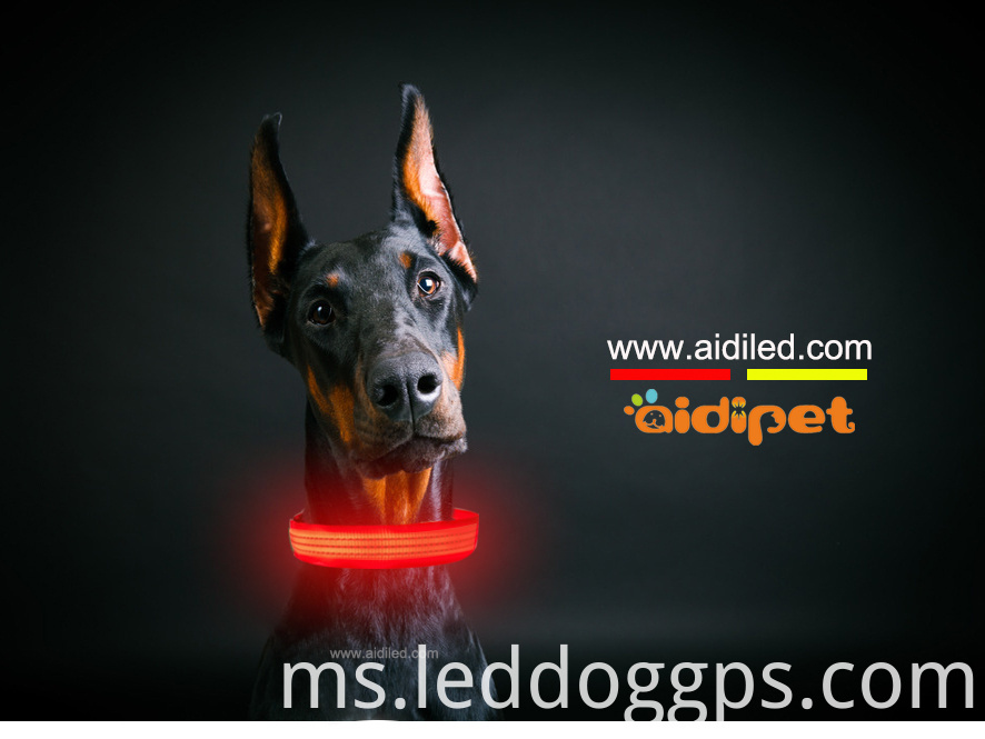 Nylon Lighted Dog Collar