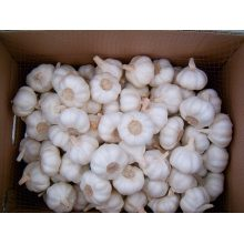 Jinxiang 4-5CM White Garlic For Sale