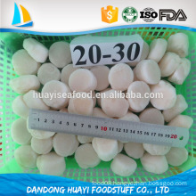 Bulk Packaging and FDA,ISO Certification dried bay scallop