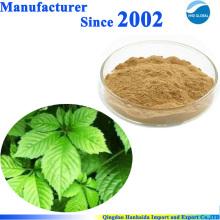 Produit de soin naturel Gynostemma PE 98% Gypenosides