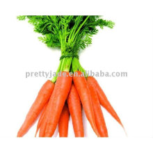 2013 Hot sale Chinese fresh red Carrot supplier
