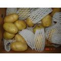 Frische neue Ernte-Holland-Kartoffel
