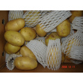 Fresh New Crop Holland Potato
