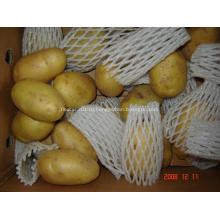 Свежий новый урожай картофеля Голландии
