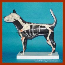 Advanced Dog Half Skeleton Anatomic Model