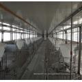 Línea de alimentación automática de equipos de granja de cerdos