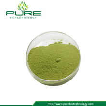 Freeze Dried Moringa Leaf Extract 5:1 10:1 20:1