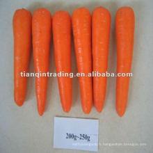 carotte rouge fraîche pour la Corée du Sud
