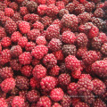 Zl-1046 Anic Blackberry Zl-1046 7