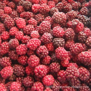 Zl-1046 Anic Blackberry Zl-1046 26