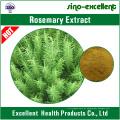 Extracto de alecrim 100% natural em pó