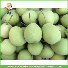 Gute Qualität Cold Storage Frische Shandong Birne