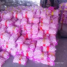 2016 Cultivo Fresco Normal Ajo Blanco Venta caliente en China