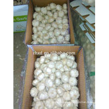 6.0cm garlic 10 kg carton pure white garlic for Brazil