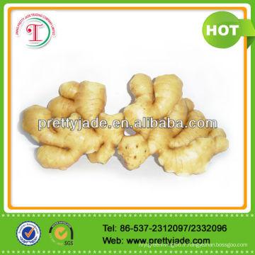2014 nouveau gingembre frais