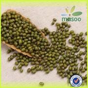 Chinese agricultural beans of green mung bean/green bean and mung bean