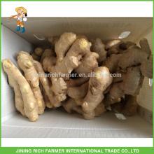 Fresh Ginger Exporter Chinese Ginger 200g up PVC Box