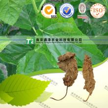 Natural Herbal Plant Raw Material Folium Mori
