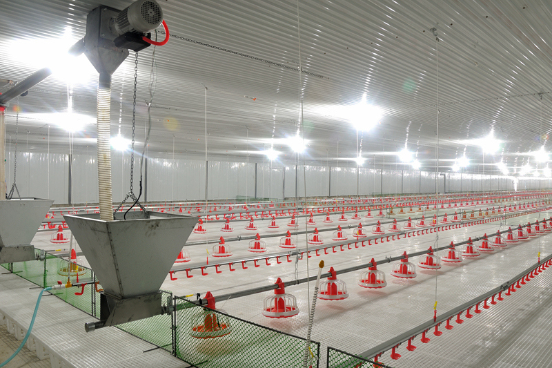 Automatic Poultry Farming Equipment For Chicken Farm