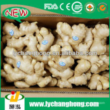 Half Air Dried Ginger From China For UK and Canada Market