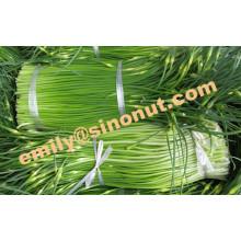 Nouvelle tige d'ail frais 200g / Bundle