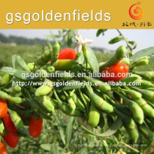 the size about QIYU-1has high production goji berry seedlings