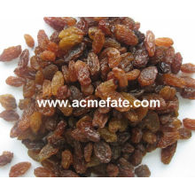 best price red raisin from China