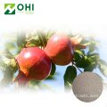Pomegranate Peel Extract ผงยา Punicalagin