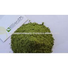 Moringa Powder Commercial Producer