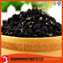 wild black lycium sinensis mill
