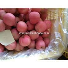 Rosy Blush Nueva temporada Fuji Apple