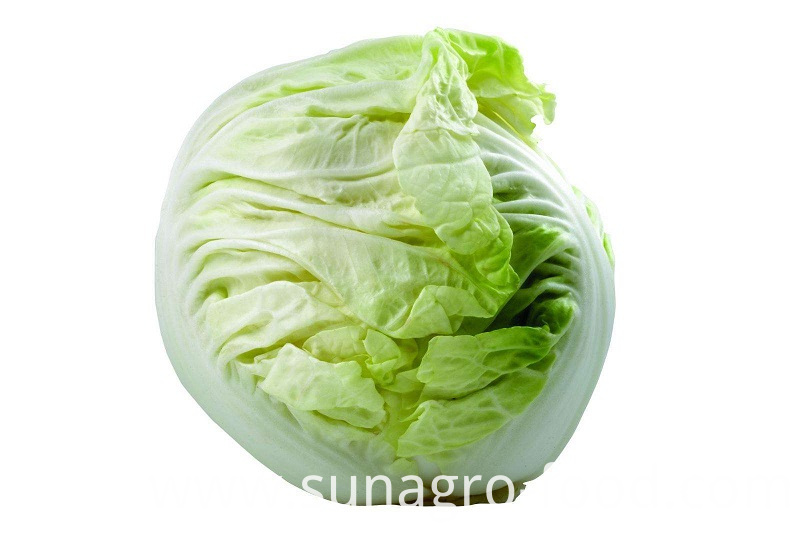 Green Fresh Packaged Cabbage