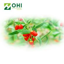 Goji Berry Extracto Polisacáridos Powdert